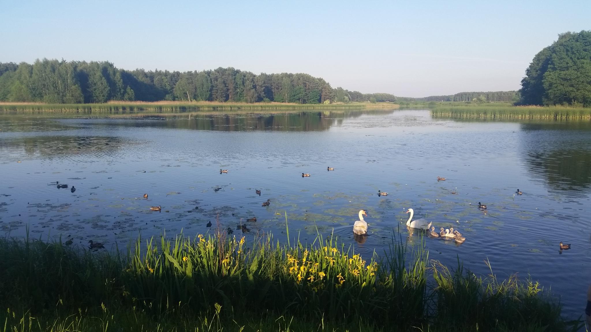 Zbiornik Zielona w Kaletach