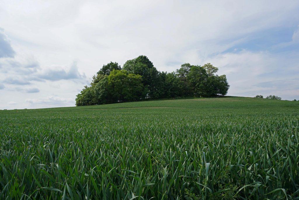 Wzgórze Ernesta widziane z drogi
