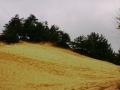 pustynia4